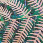 Rośliny – idealna ozdoba